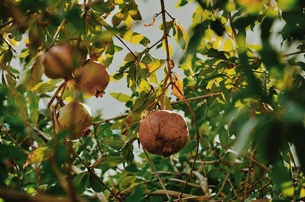 Отдых в Алупке осенью в сентябре