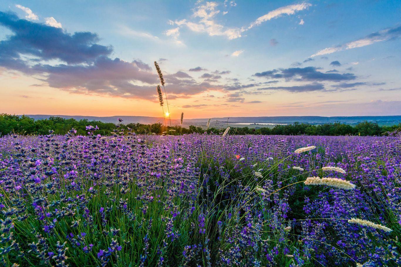 Приезжайте на отдых в Крым и Алупку весной